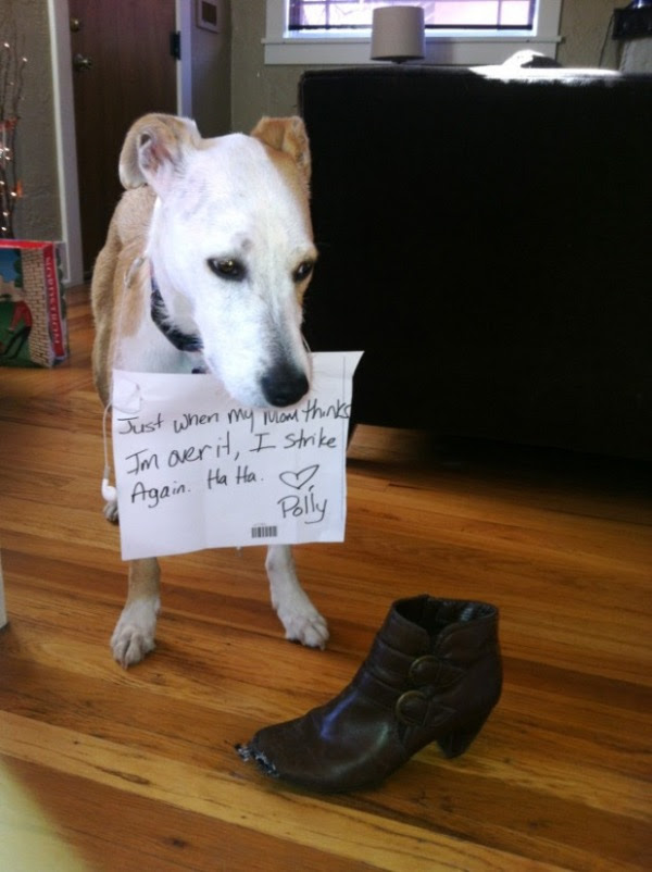 guilty-dogs-6