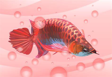red arowana wallpaper gallery