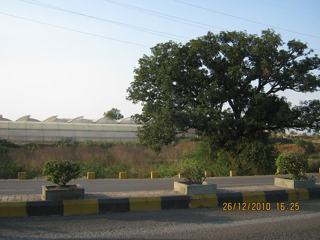 Tree and Flori-culture  - Mahavir Natura, almost Ready for Possession 1 BHK & 2 BHK Flats at Talegaon MIDC Junction on Old Mumbai Pune Highway (NH4) at Vadgaon Maval, Pune 412 106