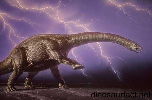 http://www.dinosaurfact.net/Pictures/Apatosaurus.jpg