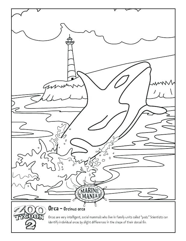 Beluga Whale Coloring Page at GetColorings.com | Free ...