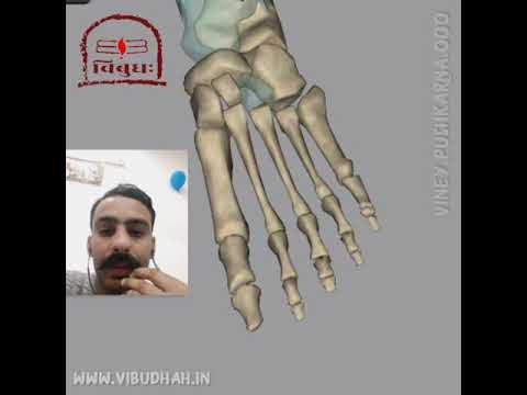 Feet Anatomy -Bone Section