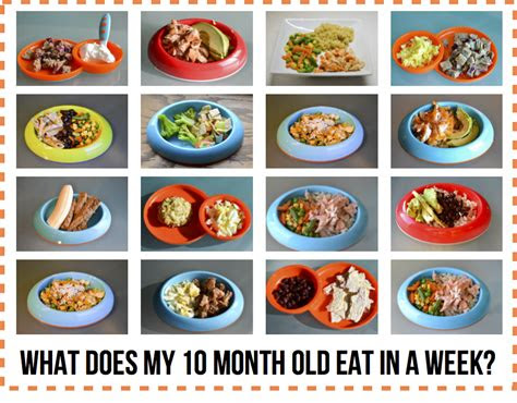 month  baby diet developernews