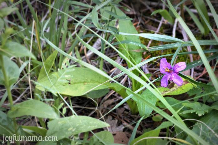 purple_weed
