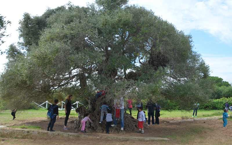 olivier echraf