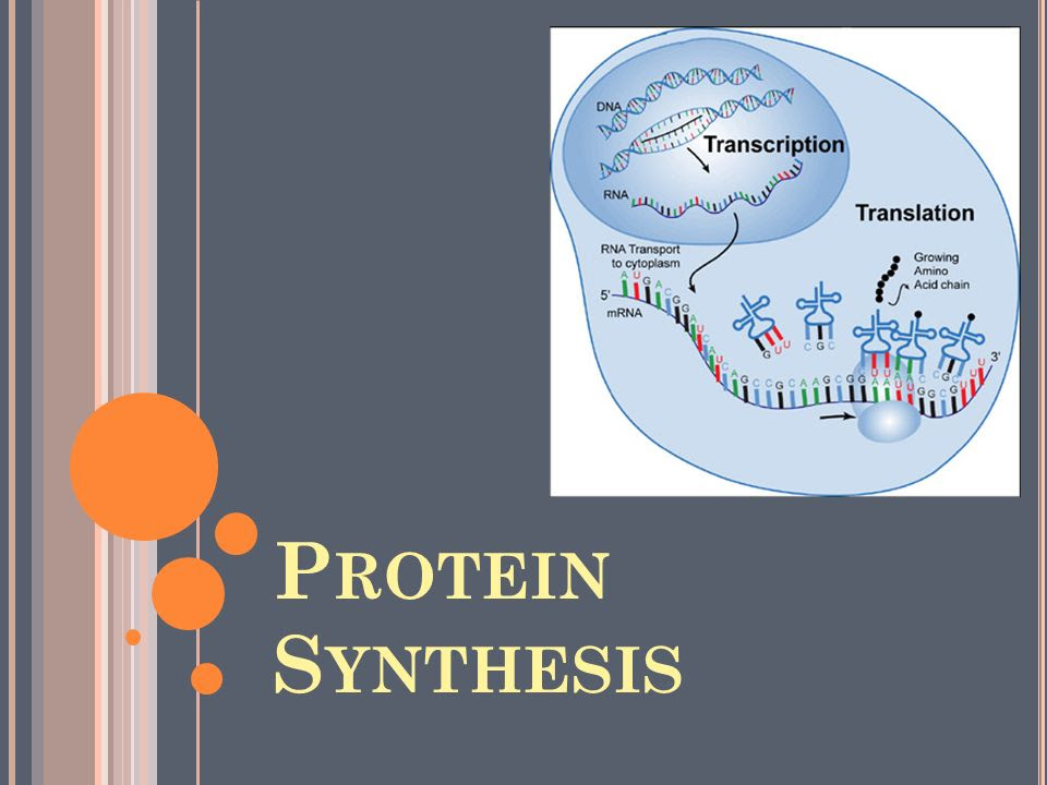 フレッシュ Dna Rna Protein Synthesis Homework 3 Rna And ...