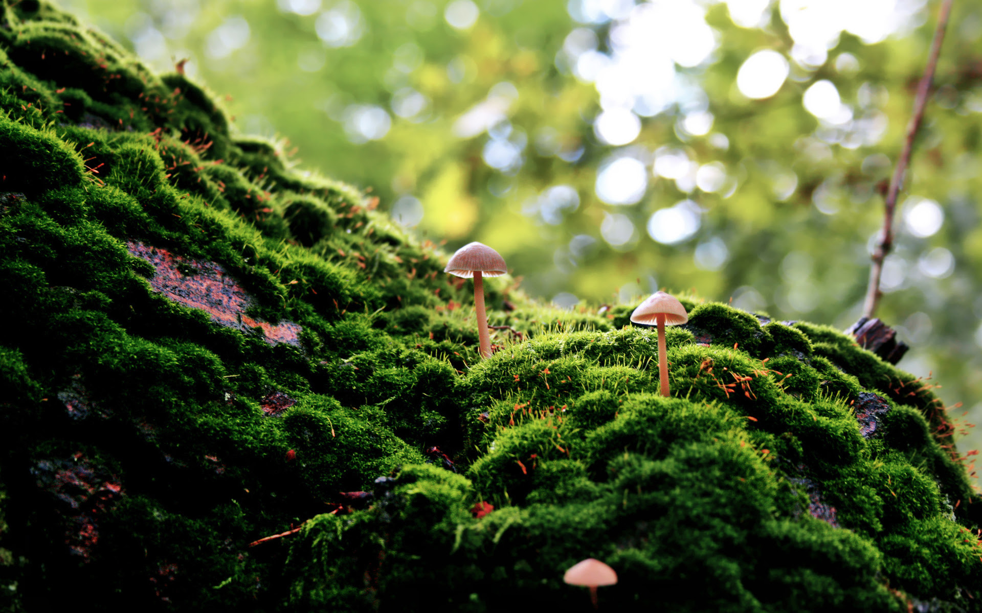 mushroom wallpaper landscape  HD Desktop Wallpapers  4k HD