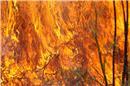 Κι όμως, οι φωτιές καίνε κάθε χρόνο λιγότερες εκτάσεις