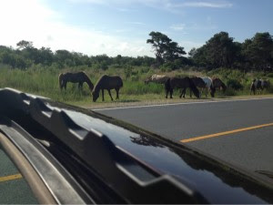 car and horses NP