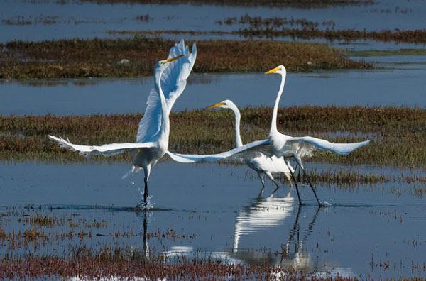 Morro Bay                                                           National                                                           Estuary -                                                           Morro Bay,                                                           California