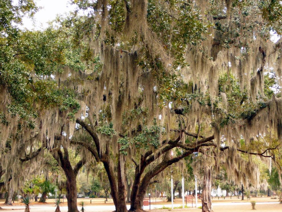 St Helena Kapel van Ease, South Carolina, een prachtig voorbeeld van de Spaanse Mos die groeit op bomen in Zuid-Carolina