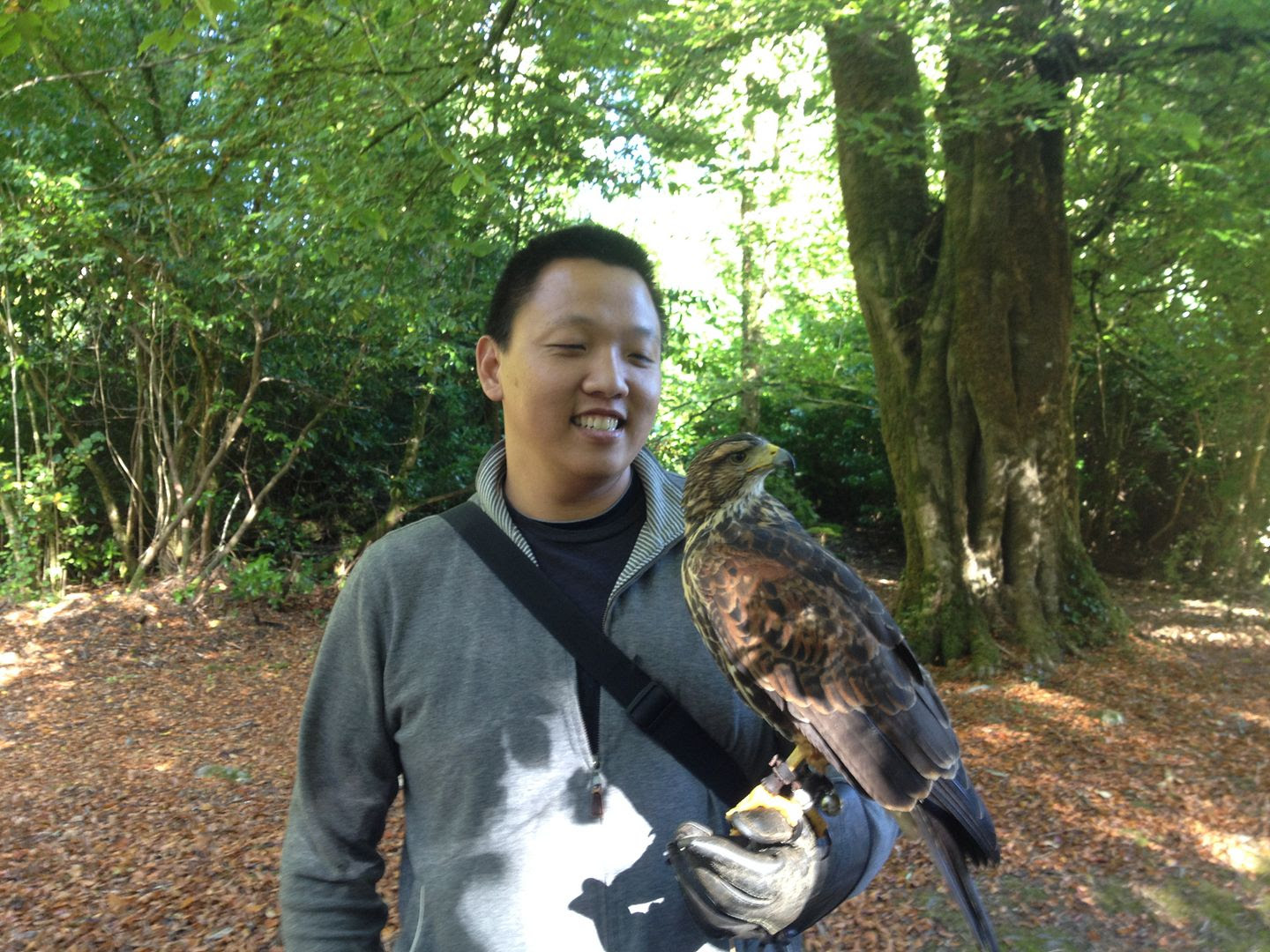 Ireland's School of Falconry Hawk Walk photo 2015-10-13 11.52.56_zpsocwxjneq.jpg