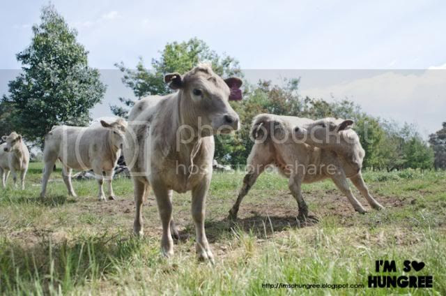photo 2-king-valley-premium-beef-1997_zpsb9492868.jpg