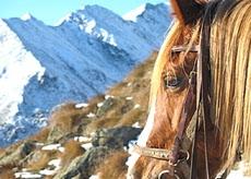 Cavallo montagna