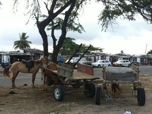 A região do Vergel concentra uma grande quantidade de carroças sem emplacamento. (Foto: Rivângela Gomes/G1)