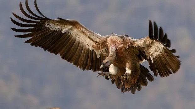 ¿Qué aves son las que vuelan más alto?