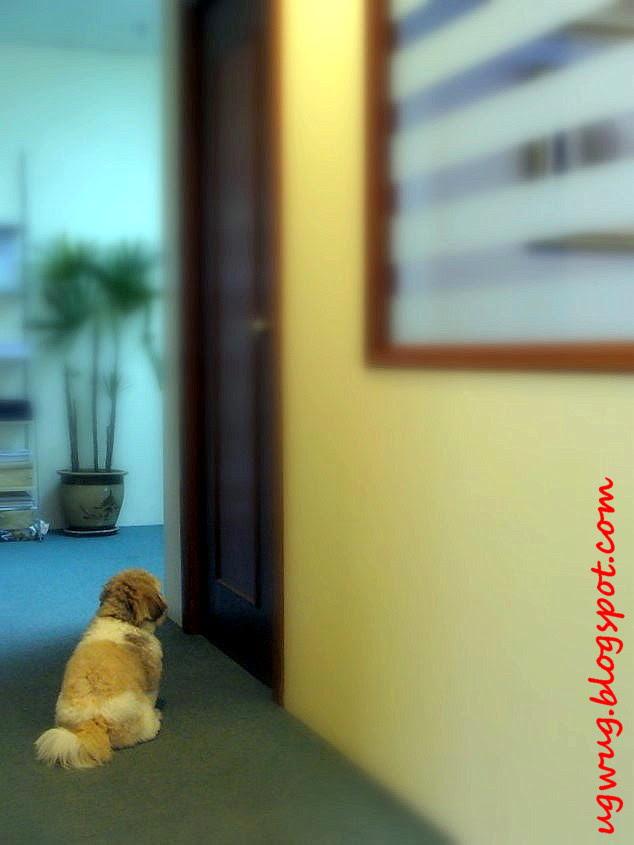 Buddy waiting