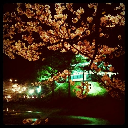 お花見 高田城