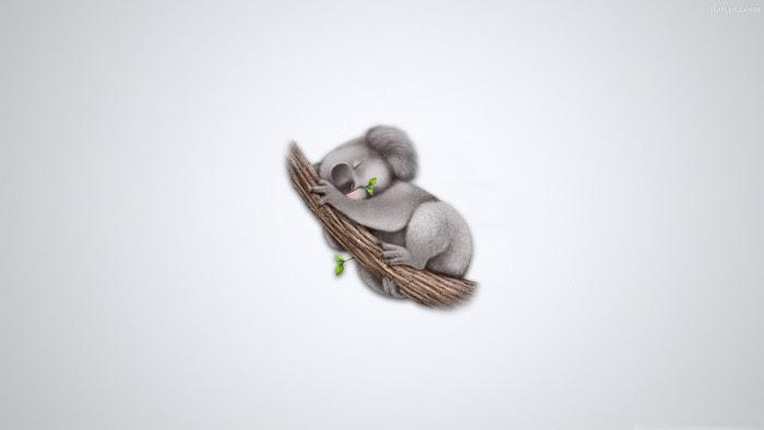 Koala HD Desktop Wallpaper 30667 - Baltana