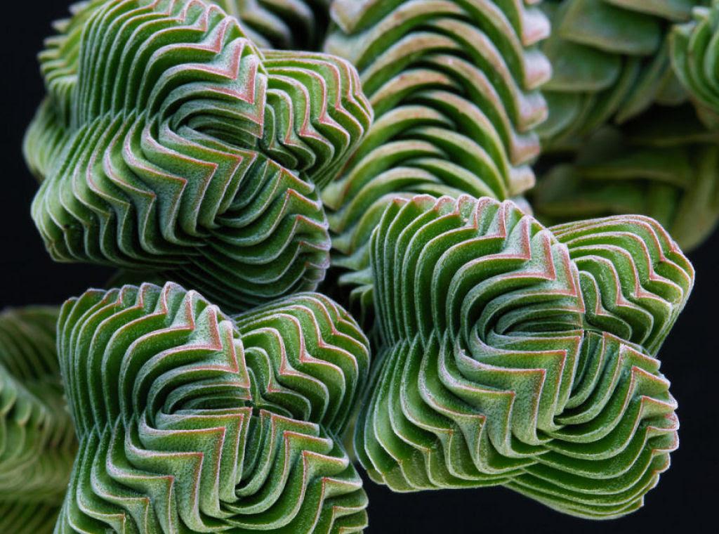 25 Fotografias de plantas para os amantes da matemática 07