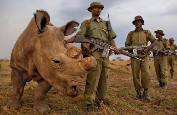 Varias organizaciones se unen para mostrar al mundo la cruda realidad de los rinocerontes