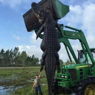 Caimán gigante