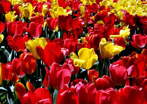 Os Poderosos Podem Matar Uma Duas Ou Três Rosas Mas Jamais Conseguirão Deter A Primavera Inteira: Momentos De Gina: Primavera