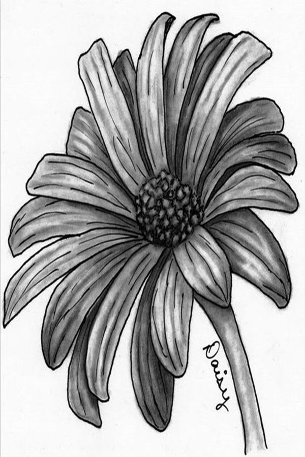50 Easy Flower Pencil Drawings For Inspiration