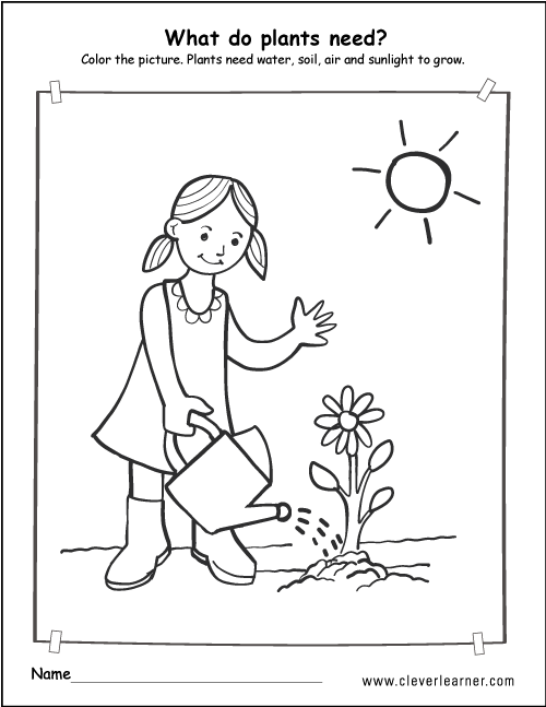 science plant needs for preschools 1a