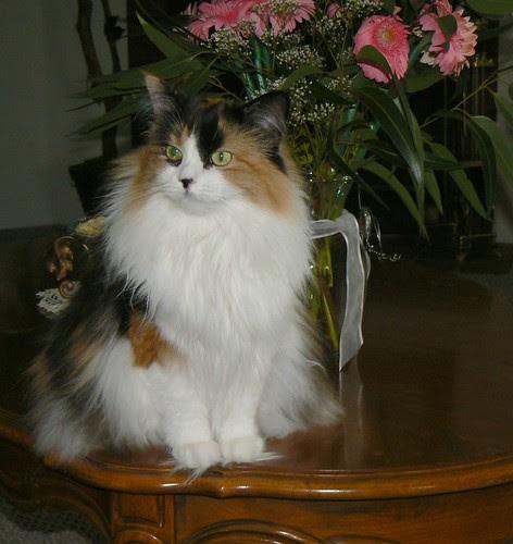 Cookiecat Pussycat by ~Sage~