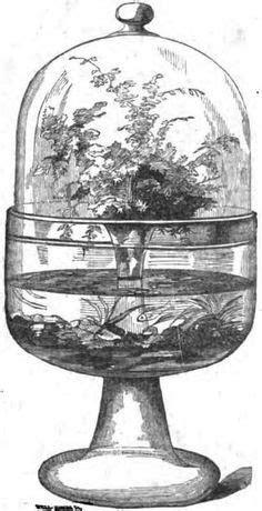 victorian fern cases | Victorian terrariums, Wardian case