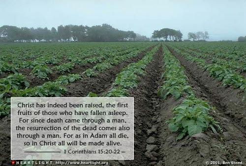 1 Corinthians 15:20-22 (135 kb)