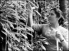 Image result for swiss spaghetti harvest