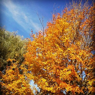 I #love #fall in #newengland  #deck #backyard #sky #foliage #tree #leaves #leaf #newhampshire #orange