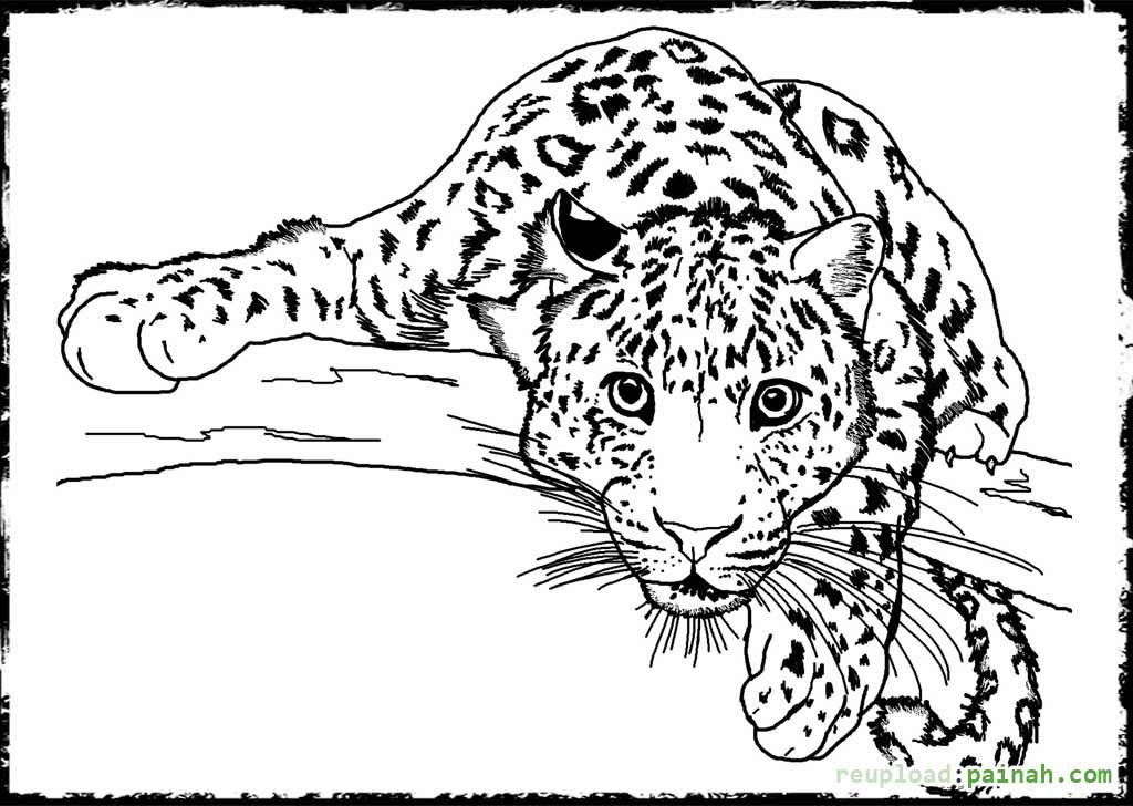 830 Top Coloring Pages Animals Adults , Free HD Download