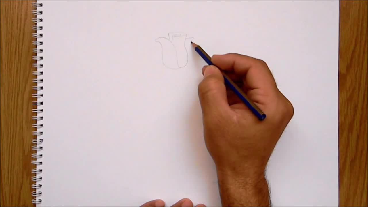 Kolay çiçek çizimleri Gül Karanfil Gündüz Sefası çiçeği çizimi