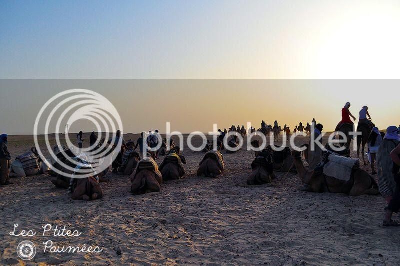 Entrée du désert Sahara à Douz Tunisie avec les dromadaires