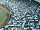 supporters vert et blanc Algérie  Coupe du Monde 2014