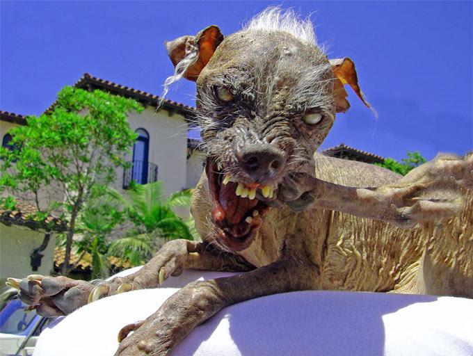Ugliestdog