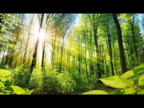 Relaxing Music for Stress Relief. Calm Celtic Music for Meditation, Heal...