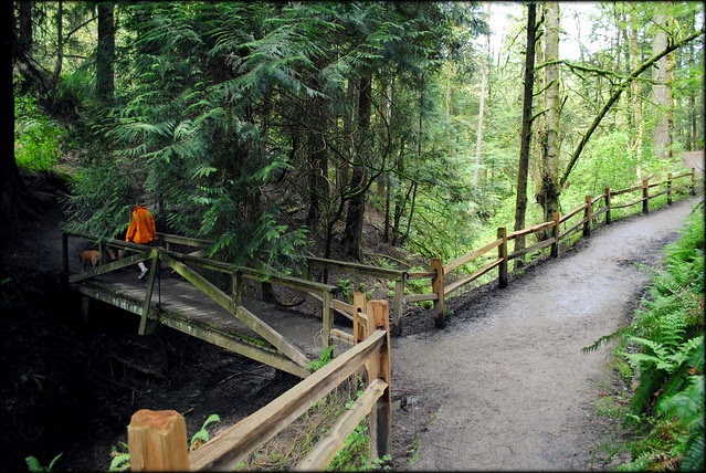a section of the Wildwood Trail in the Hoyt Arboretum - Portland, Oregon