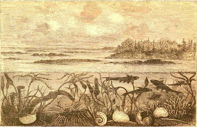 marine life in the Carboniferous Period