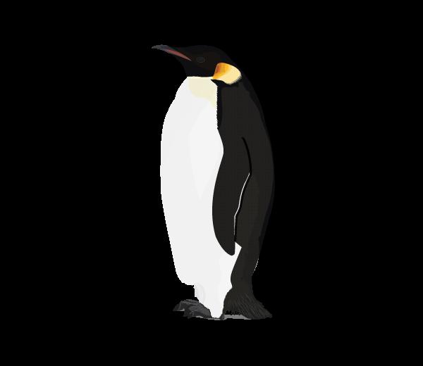 Penguin PNG Transparent Images | PNG All