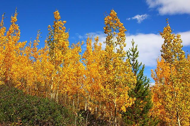IMG_8086_2 Taggart Lake Trail, Grand Teton National Park