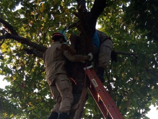 Homem é resgatado de árvore em Araguaína (Foto: Bombeiros/Divulgação)