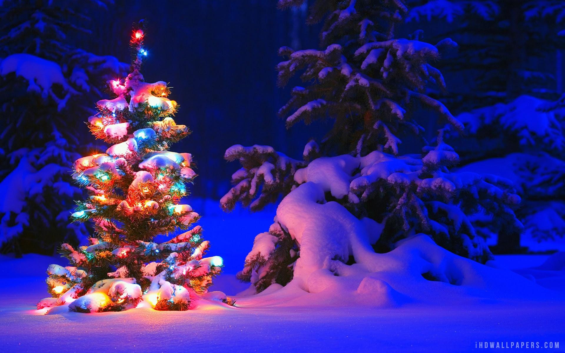 Christmas Tree Snow Wallpaper Sf Wallpaper