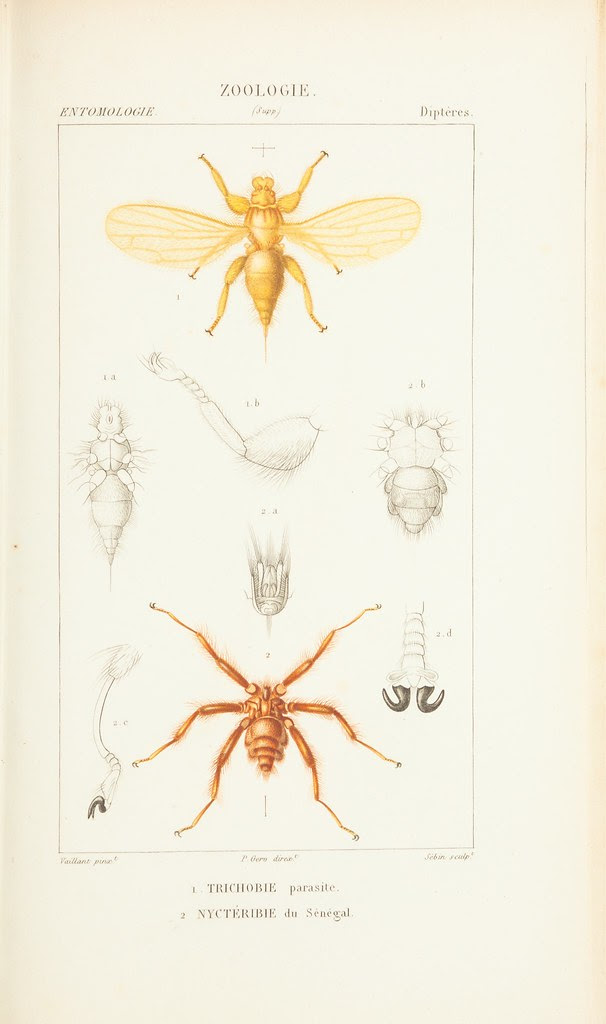 6-legged insects