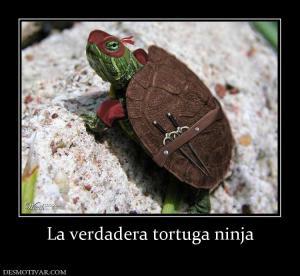 La verdadera tortuga ninja