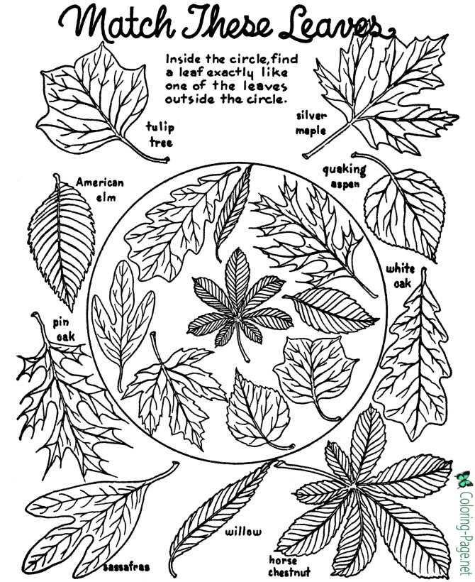 tree leaves 08
