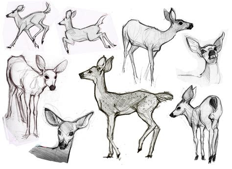 alisons art blog animal sketches